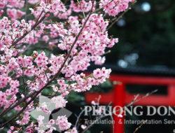 Công ty dịch thuật tiếng Nhật uy tín giá rẻ tại Hà Nội
