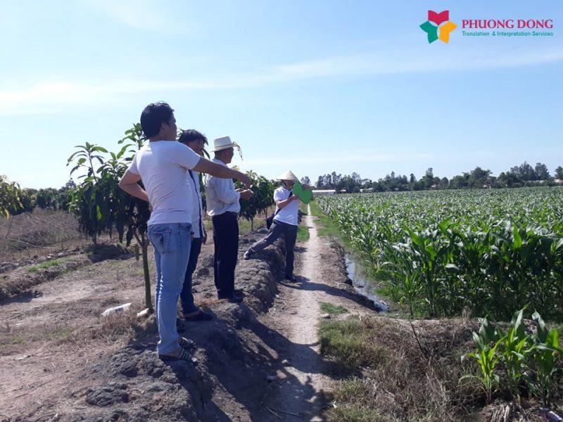 Phiên dịch Anh – Việt cho cty sản xuất nông sản Việt Nam đón khách hàng từ Canada tham quan nhà máy và vùng nguyên liệu